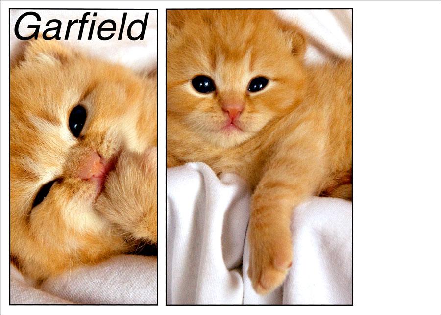 kitten pet photography sarasota