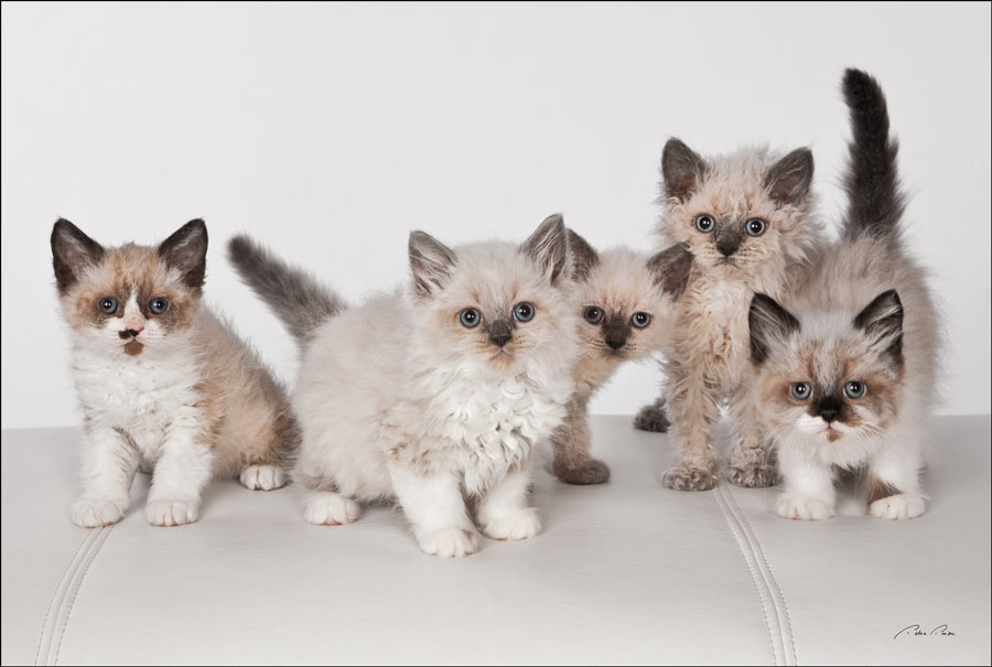 kitten photography sarasota
