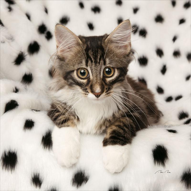 cat studio photography