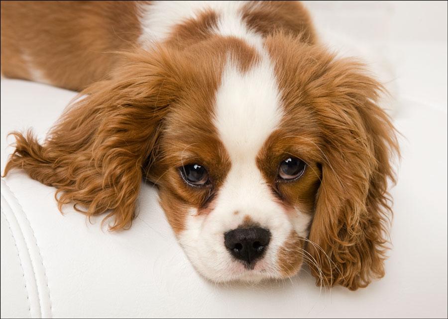 dog studio photography