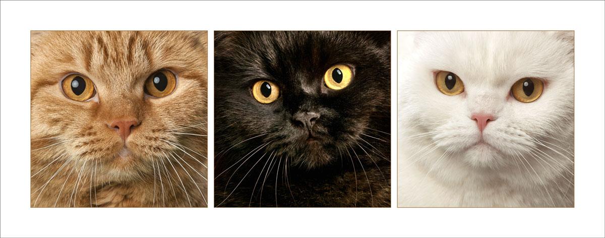 cat studio photography sarasota
