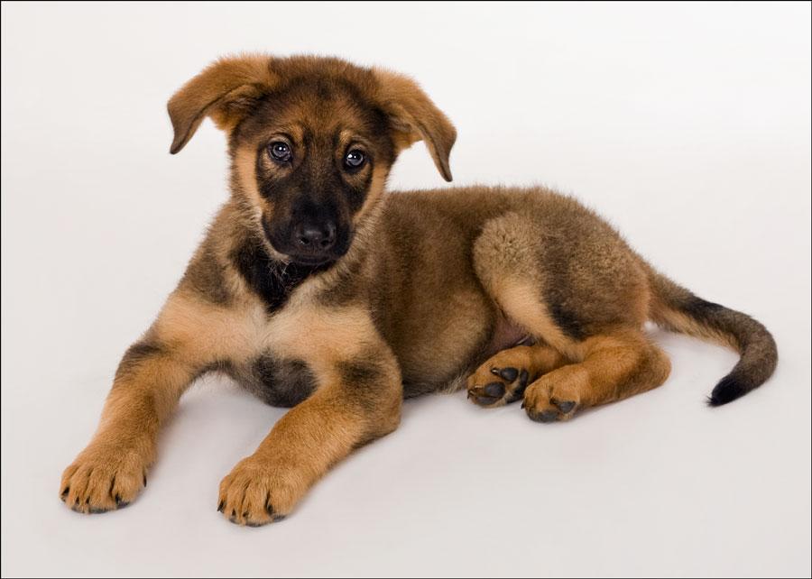 puppy photography venice fl