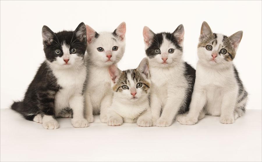 kitten photography venice fl