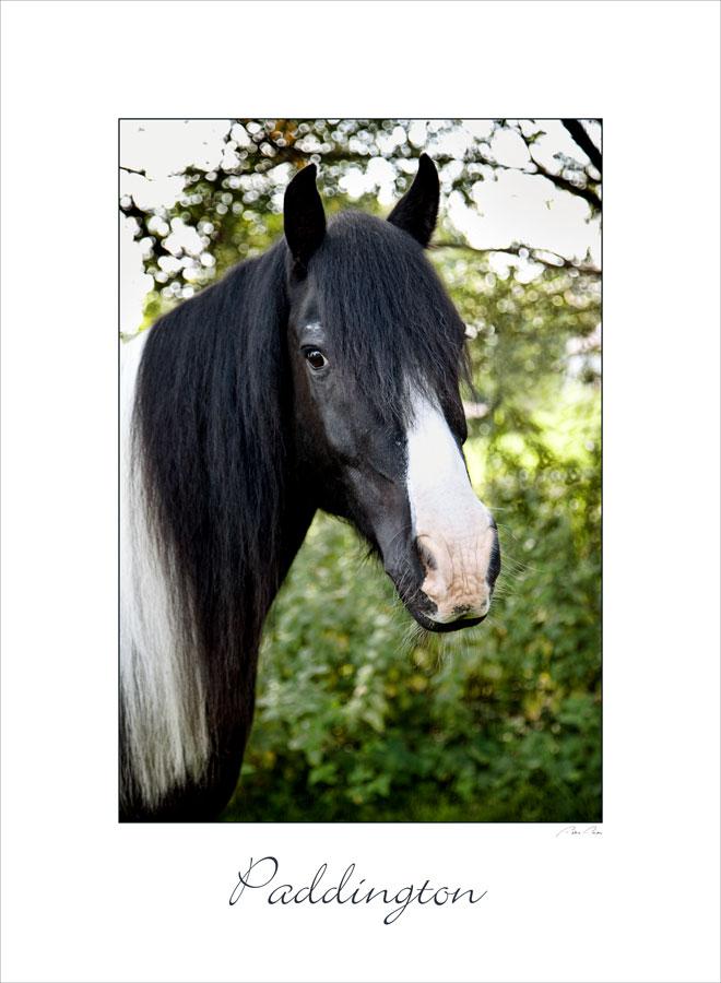 horse photography sarasota